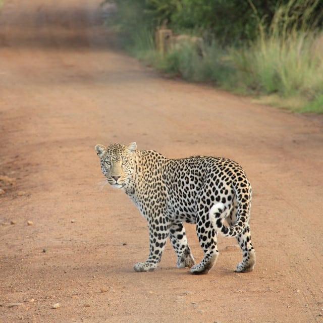 Safari Botswana - Voyage Botswana