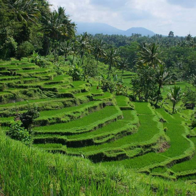 Ubud - Voyage Bali, Indonésie