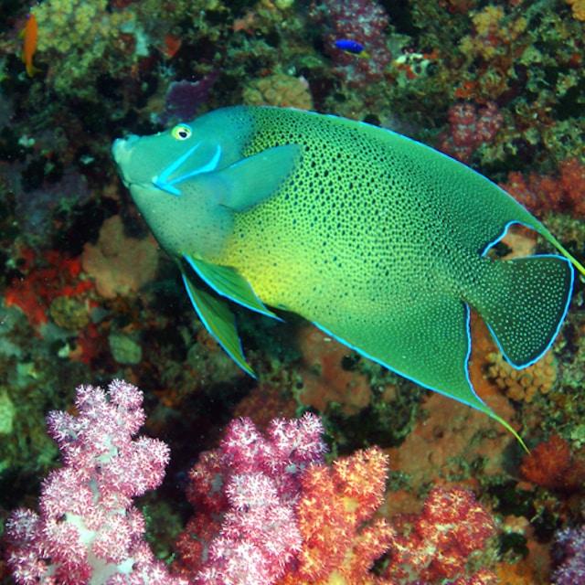 Plongée - Croisière aux Seychelles