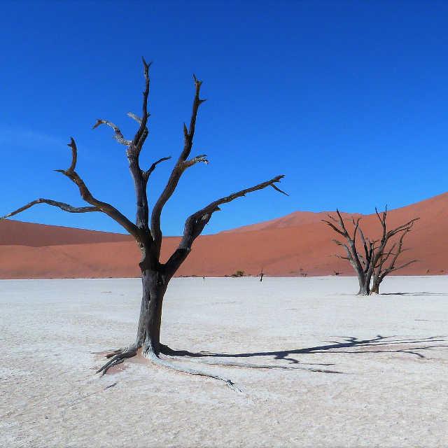 sossusvlei-namibie-afrique-australe